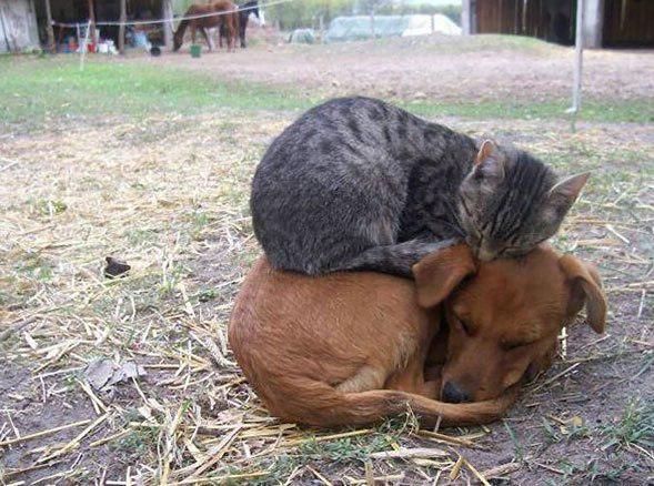 Draugi Autors: Ciema Sensejs 20+ kadri, kuri pierāda, ka kaķi var gulēt pilnīgi visur