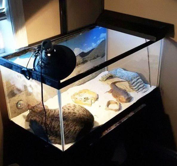 nbspSiltākā istaba iekscaron... Autors: Ciema Sensejs 20+ kadri, kuri pierāda, ka kaķi var gulēt pilnīgi visur