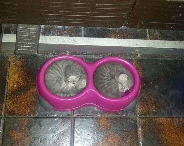 Dvīņi Autors: Ciema Sensejs 20+ kadri, kuri pierāda, ka kaķi var gulēt pilnīgi visur