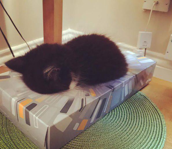 Tā pat ir labi ja pat netiek... Autors: Ciema Sensejs 20+ kadri, kuri pierāda, ka kaķi var gulēt pilnīgi visur