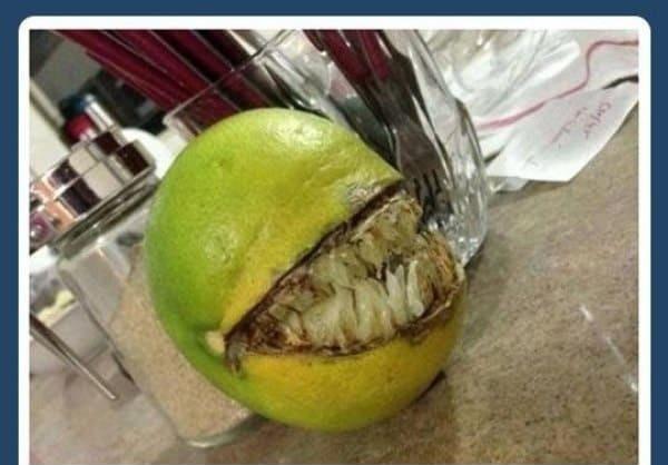 Arī apelsīni var būt baisinbsp Autors: baarnijs03 Šausmīgas bildes, no kurām šermuļi skrien!