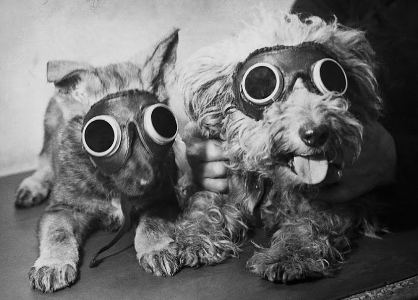 Suņi gaida ultravioletās... Autors: ezkins Cilvēka un suņa draudzības svētki