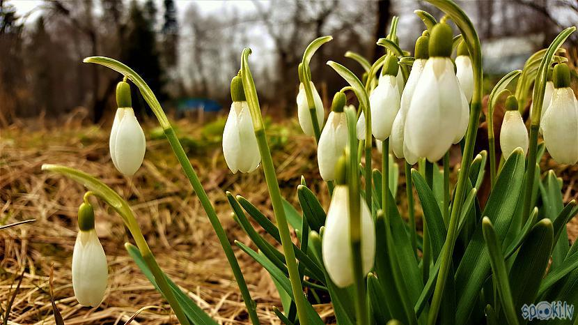 Autors: Mr.Sīpoliņs Fotogrāfijas #10 Pavasaris