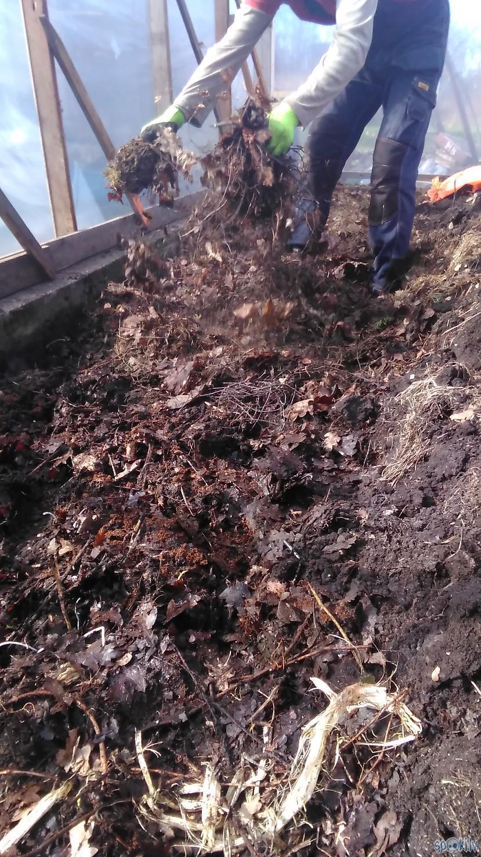 Gan komposta gan lapu slānim... Autors: Raziels Kā par brīvu apkurināt siltumnīcu