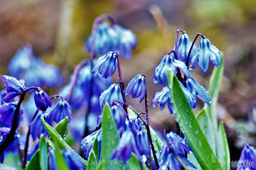 Autors: Mr.Sīpoliņs Pavasaris #13