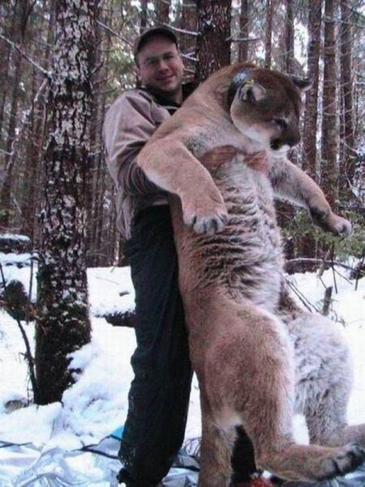 Es te vienu mazu kaķīti mežā... Autors: Emchiks Iespējams tikai Krievijā 9