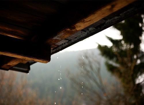 Autors: Fosilija Autumn #15