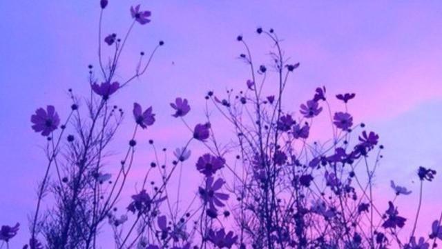 Autors: Fosilija Bildes 34 - purple