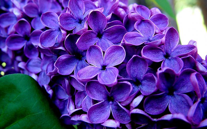 Autors: mazais28 Ziedi 9