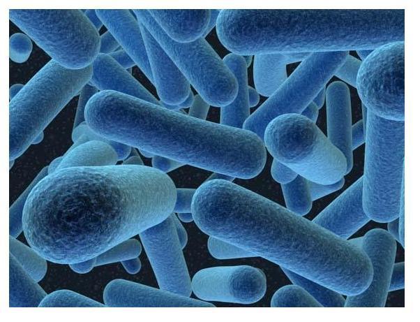 Tikai 1 no visām baktērijām... Autors: Fosilija Faktiņi par cilvēka ķermeni un tam saistītām lietām.