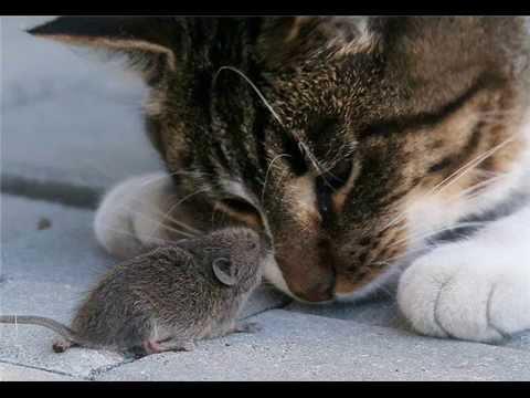 Dažreiz pele un kaķis var... Autors: ere222 zxzxhzc Peles