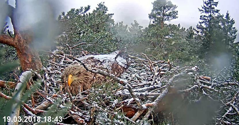 Pēcpusdienā uznāk sniegputenis... Autors: rasiks Merikotkas (1)