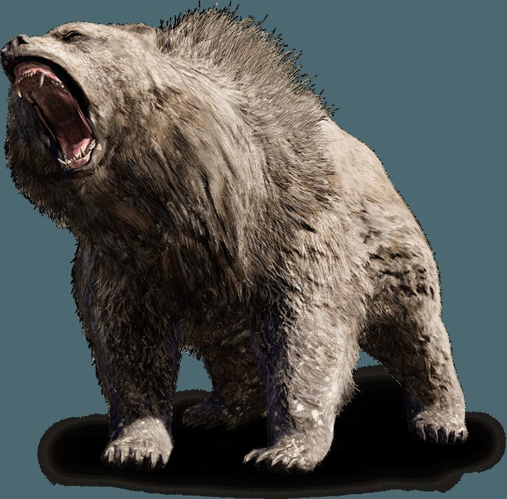 Senākās lāču dzimtas dzīvoja... Autors: ere222 zxzxhzc Lāči