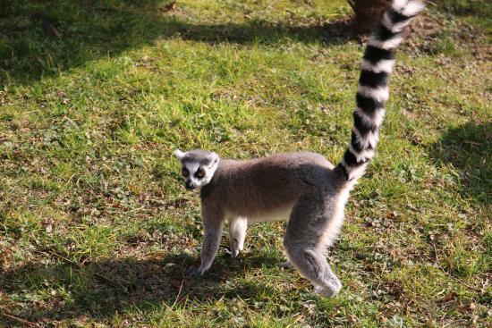 Lemuri spēj pārvietoties... Autors: ere222 zxzxhzc Lemuri