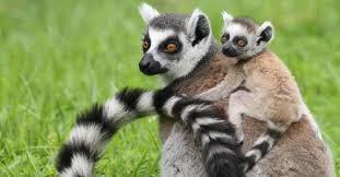 No visiem slapjdeguna... Autors: ere222 zxzxhzc Lemuri