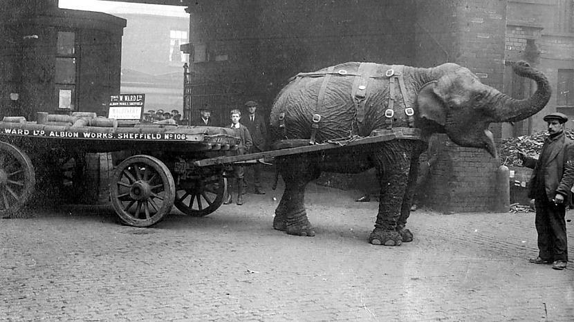 Lizija darba laikā Foto... Autors: Lestets Ziloņi 1. pasaules kara laikā