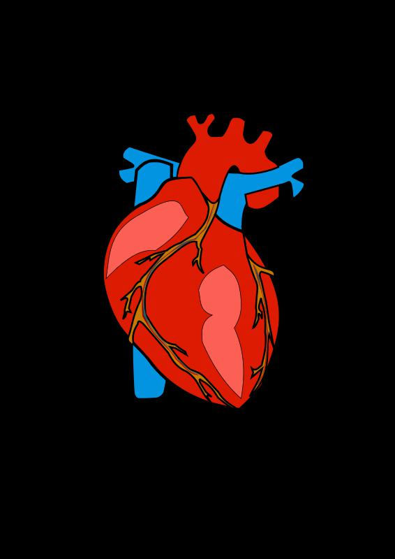 Katra cilvēka sirds ir apmēram... Autors: Blackbberry 16+ fakti par cilvēka ķermeni #2