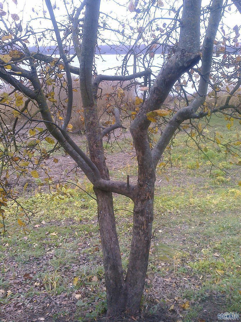 Scaronitiem kociņiem eZZiiC... Autors: ezkins Negaidīta tikšanās