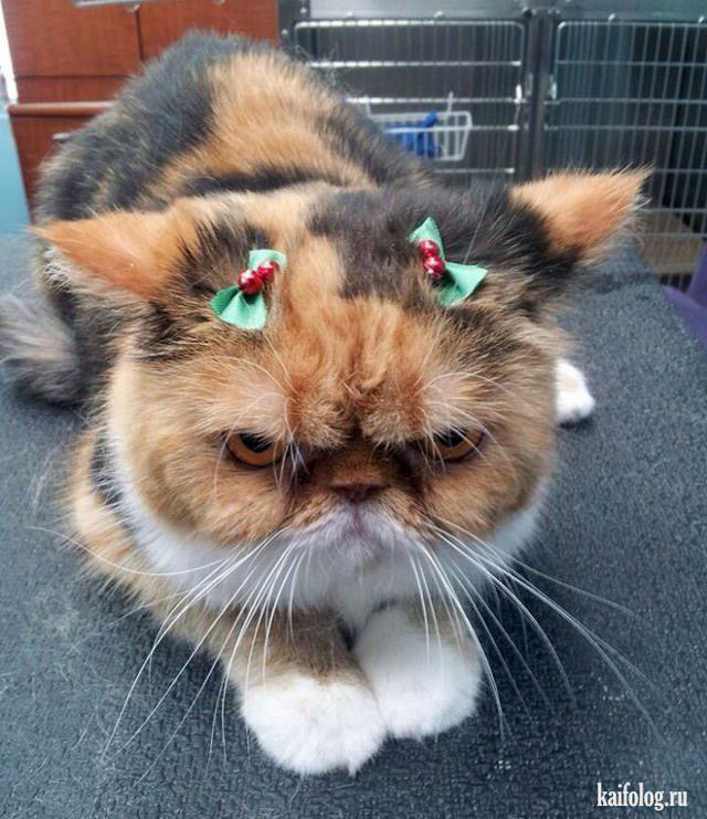 Autors: Pīters Kvils Smieklīgas Ziemassvētku un Jaunā Gada bildītes #3