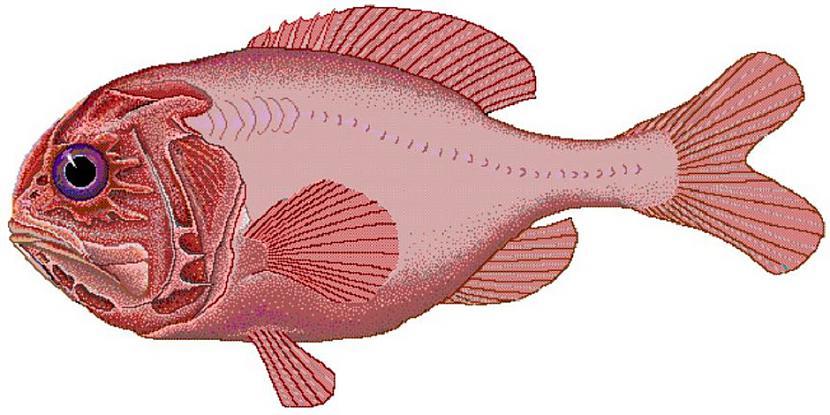 Atlantijas lielgalvis  149... Autors: Lestets 13 dzīvnieki ilgdzīvotāji