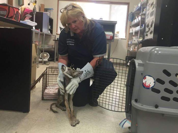 ājas īpascaronniece... Autors: nikrider Cilvēki izglāba ļoti slimu suni, bet beigās saprata, ka tas vispār nav suns