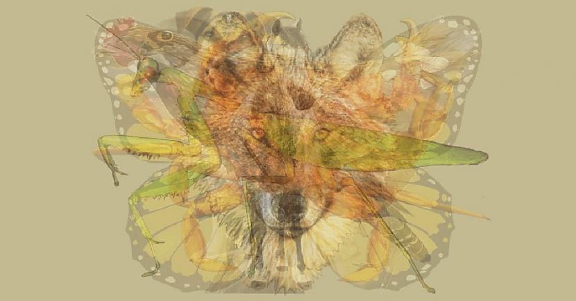 Kas tev sanāca vai zirgs vista... Autors: Lestets Pirmais dzīvnieks, ko ieraudzīsi, atbildīs tavām dominējošajām rakstura īpašībām