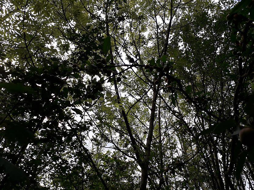 Autors: Griffith Malvernas lauki un mežs, 8. septembris. 2/2 daļa.
