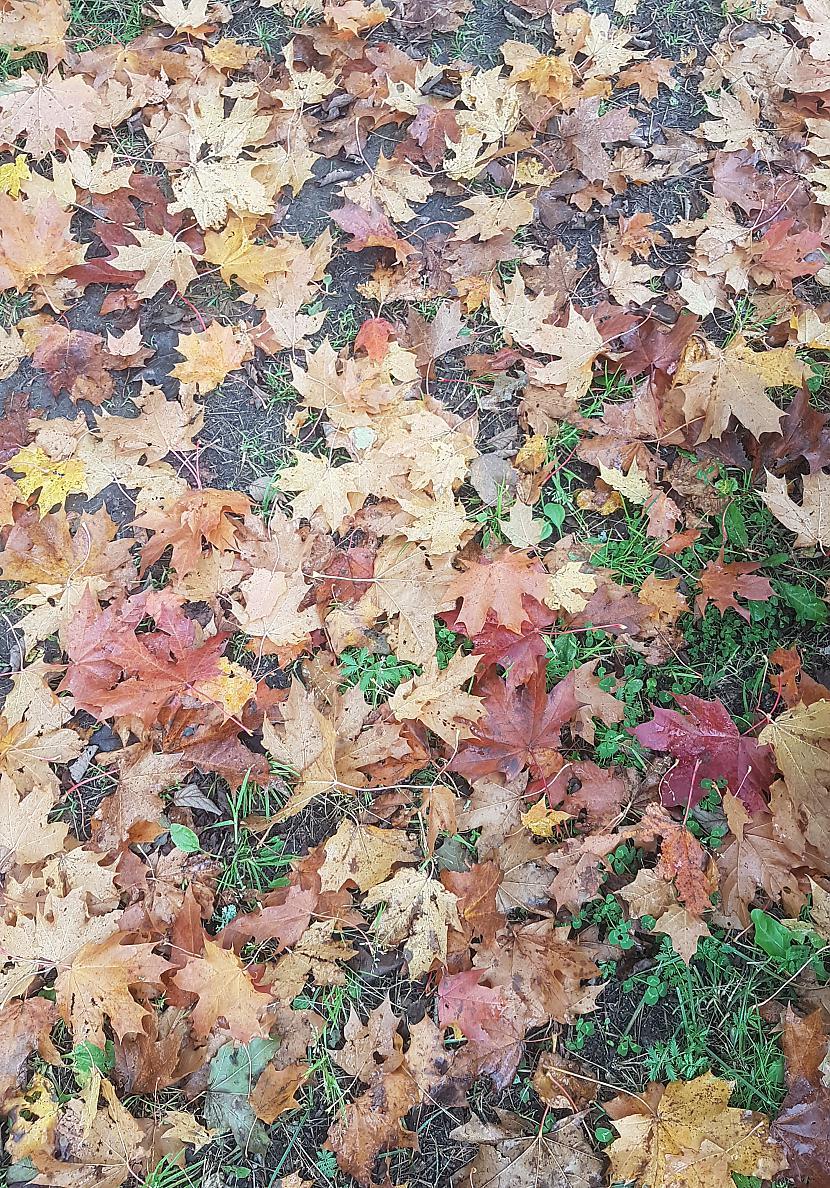 Raibās rudens skaistuma... Autors: The Diāna Atvērtais raksts: Labākie rudens foto
