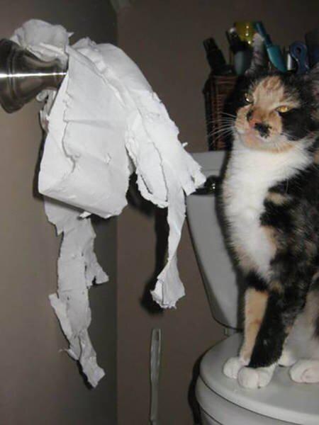 Autors: Fosilija Šīs bildes pierāda, ka kaķiem ļoti patīk spēlēties un plosīt tualetes papīru
