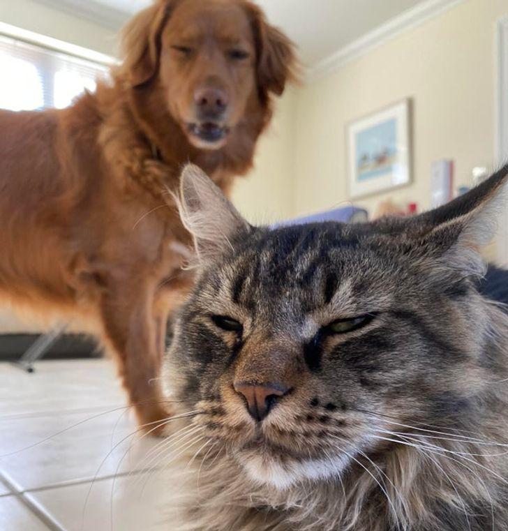 Ja tavi mājdzīvnieki skatās uz... Autors: matilde 15 attēli, uz kuriem ir jāskatās divreiz, lai saprastu, kas tur vispār notiek