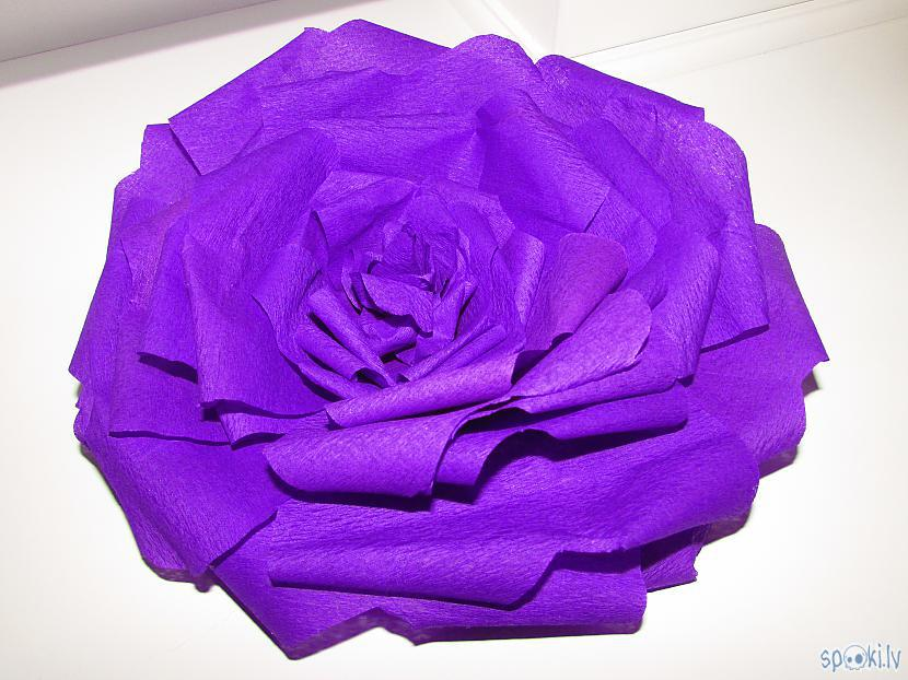 Autors: aniii7 Papīra roze - soli pa solim