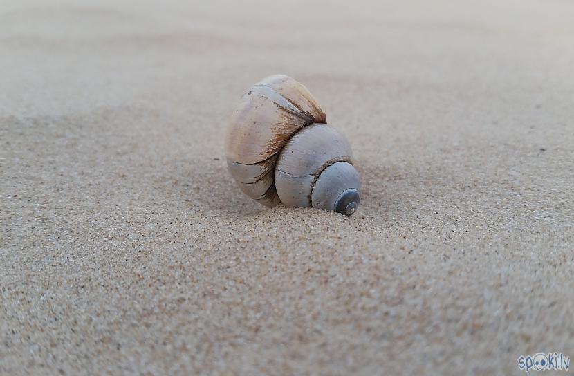 Kad nav ko rakt  vismaz... Autors: pyrathe Ar metāla detektoru pa pludmali 2020 (oktobris)