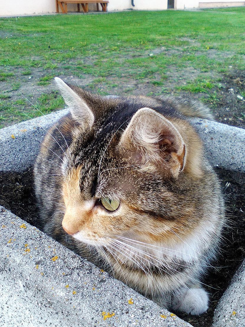 Autors: Zibenzellis69 Dažādas kaķu bildes, bildētas ar dažādiem telefoniem