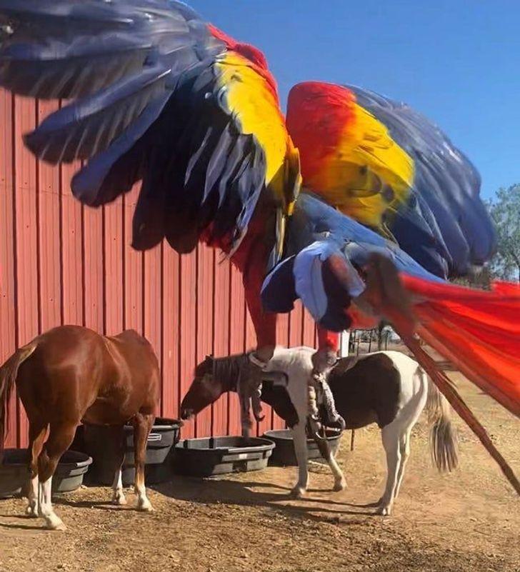 Zirgiem uzbrūk milzīgs... Autors: Lestets 19 mulsinošas fotogrāfijas, kurām ir nepieciešams papildu izskaidrojums