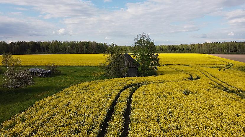 Autors: Agnis Celms Gaidām pavasari (video)