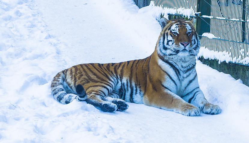 Autors: Agnis Celms Rīgas zoo (video)