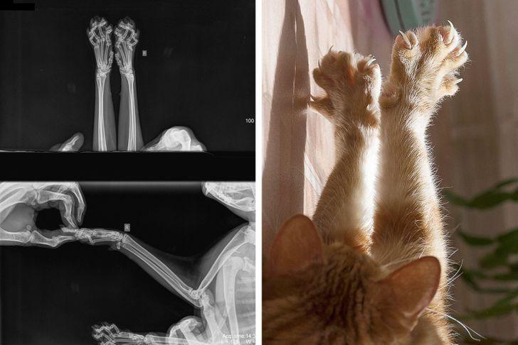 Dažkārt scaronķiet ka kaķi ir... Autors: The Diāna 18 forši rentgeni redzesloka paplašināšanai