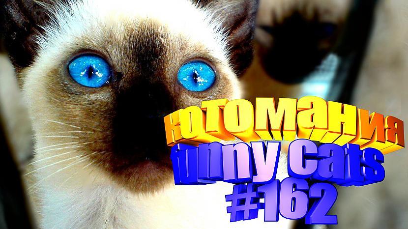 Autors: kotomaniabest Smieklīgi kaķi   Jautrība ar kaķiem, katomanija #162 (video)