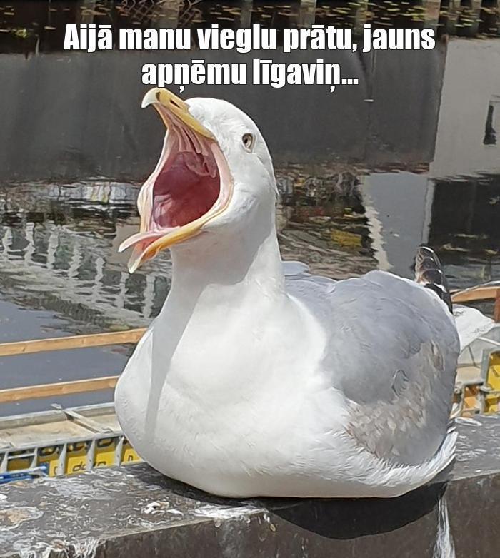 Autors: aijaks Memes