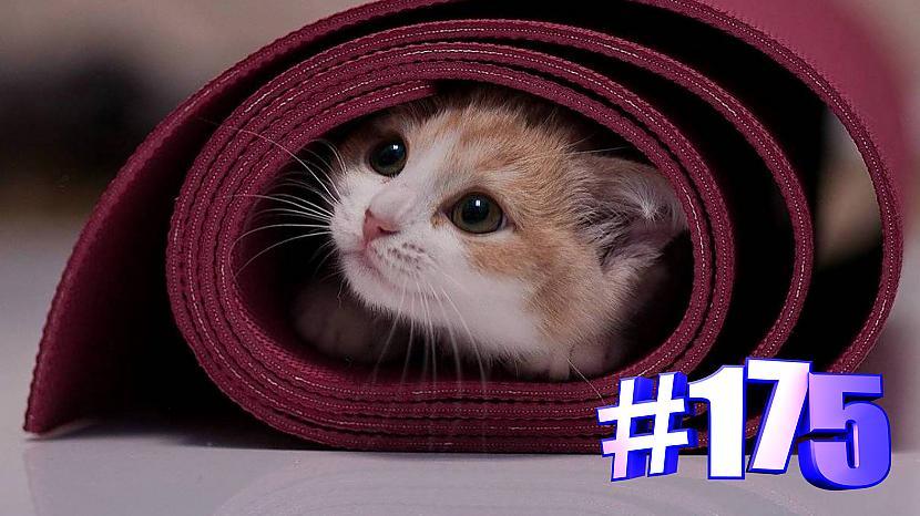 Autors: kotomaniabest Smieklīgi kaķi   Jautrība ar kaķiem, katomanija #175 (video)