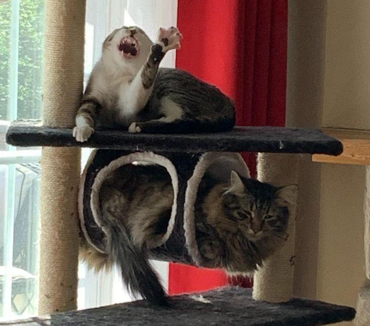 Kad tu esi rītu persona bet... Autors: Lestets 26 slinki kaķi, kuru īstā vieta būtu uz skatuves