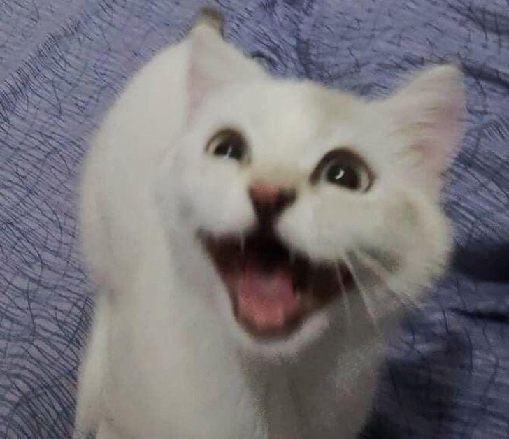 Kad tu sāc ar kaķi spēlēties... Autors: Lestets 26 slinki kaķi, kuru īstā vieta būtu uz skatuves