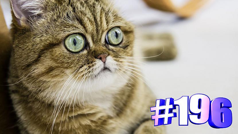 Autors: kotomaniabest Smieklīgi kaķi | Jautrība ar kaķiem, katomanija #196 (video)
