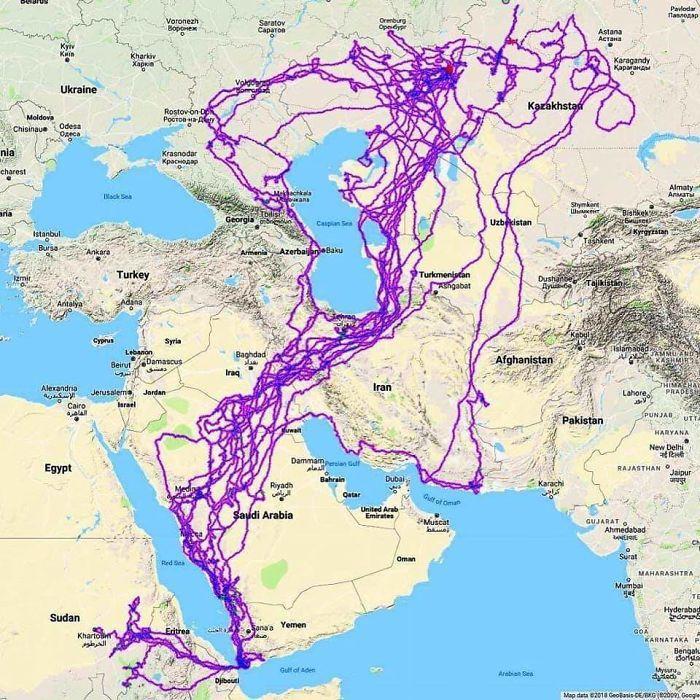 Ērgļa migrācijas marscaronruti... Autors: Lestets 20 neparastas kartes, kas var mainīt perspektīvu
