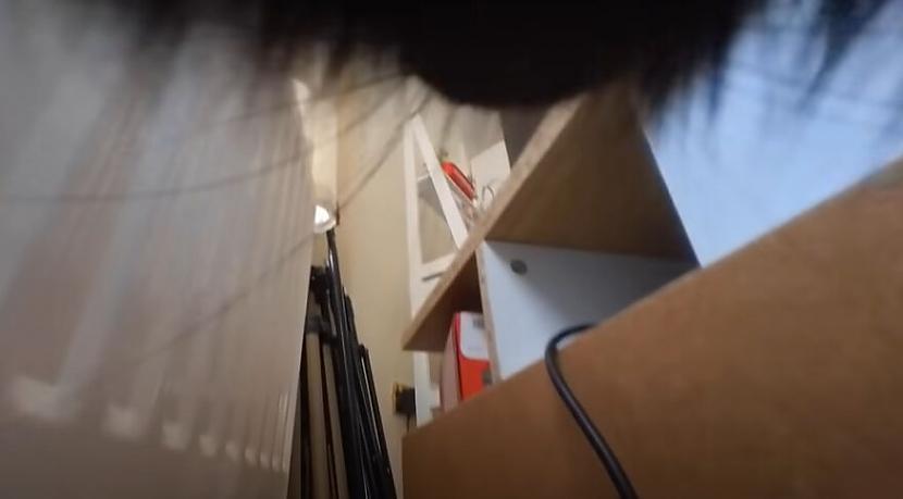 Noskaties video un pābrīnies... Autors: matilde Ziņkārīgs saimnieks piestiprināja kameru savam kaķim, lai redzētu, ko viņš dara