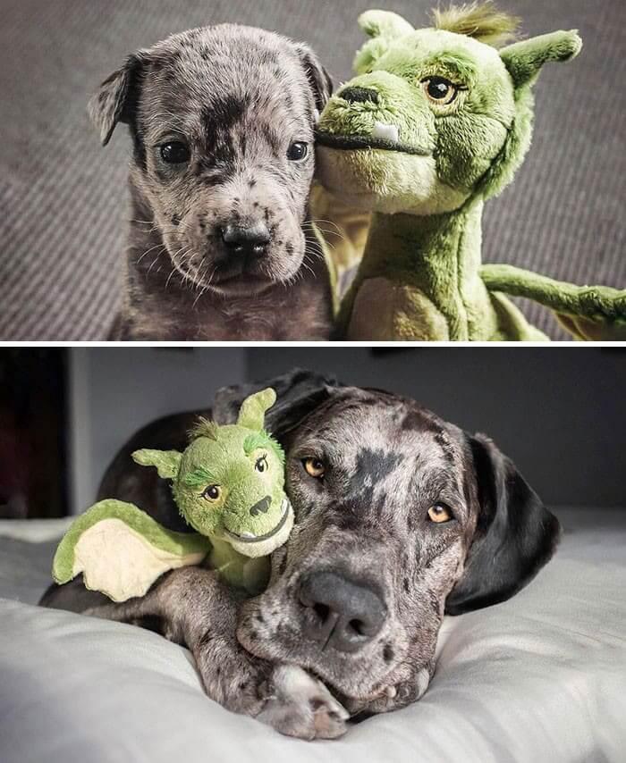 Suns ar savu mīļāko rotaļlietu Autors: Lestets 25 salīdzinājumi, kas atklāj lietu patieso būtību