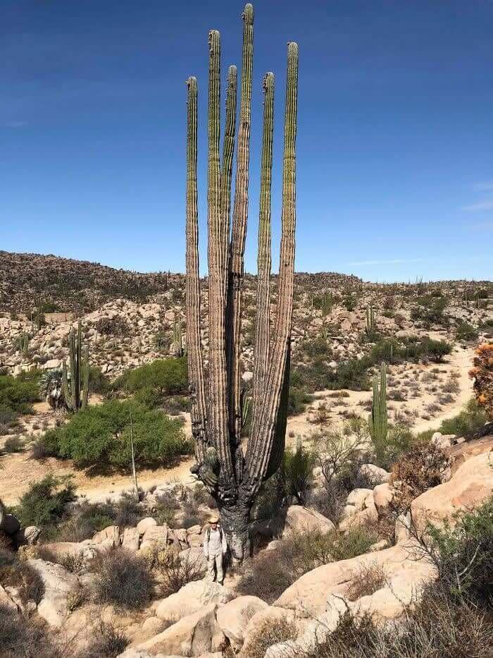 Kaktusi nav tikai mazi augi uz... Autors: Lestets 25 salīdzinājumi, kas atklāj lietu patieso būtību