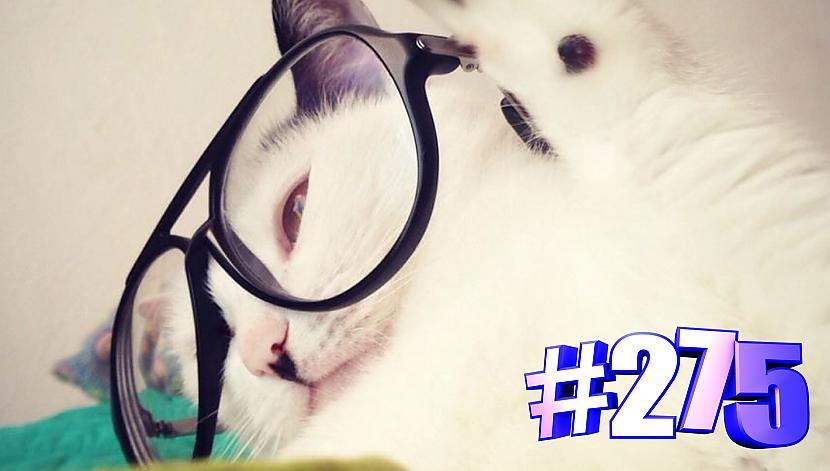 Autors: kotomaniabest Smieklīgi kaķi | Jautrība ar kaķiem, katomanija #275 (video)