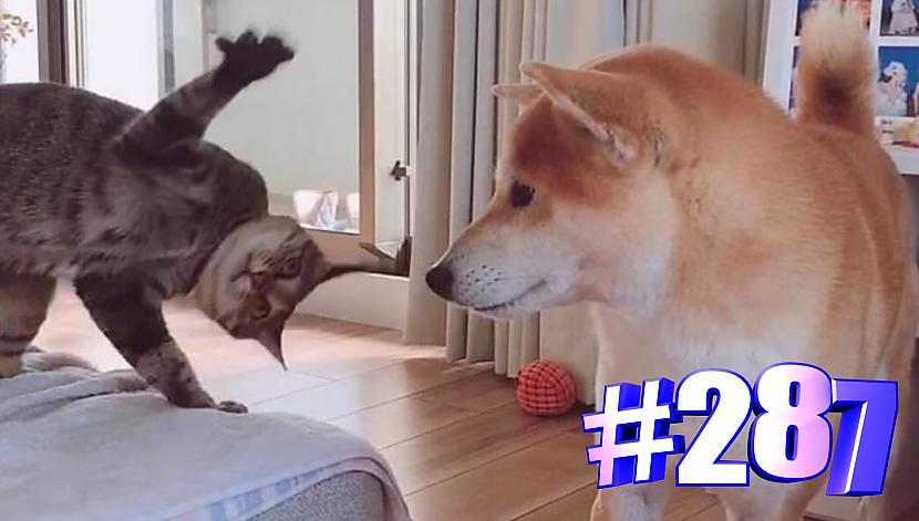 Autors: kotomaniabest Smieklīgi kaķi | Jautrība ar kaķiem, katomanija #287 (video)