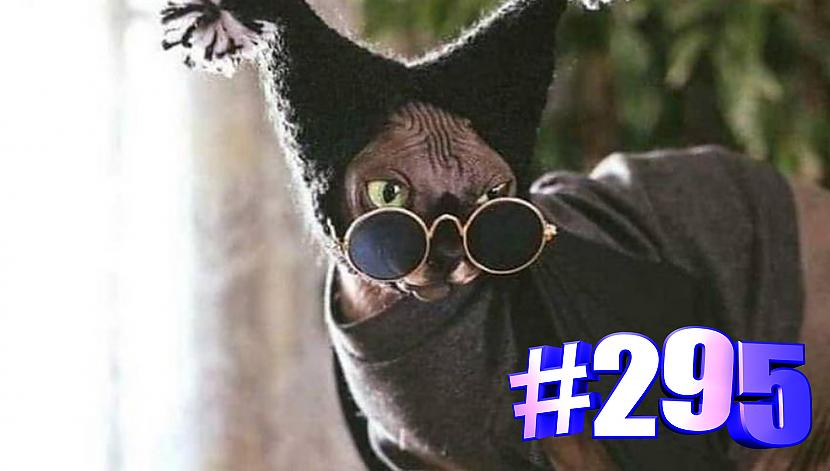 Autors: kotomaniabest Smieklīgi kaķi   Jautrība ar kaķiem, katomanija #295   (video)